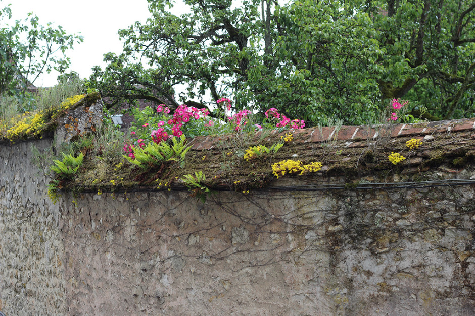 Flowers on the walls of Provins.